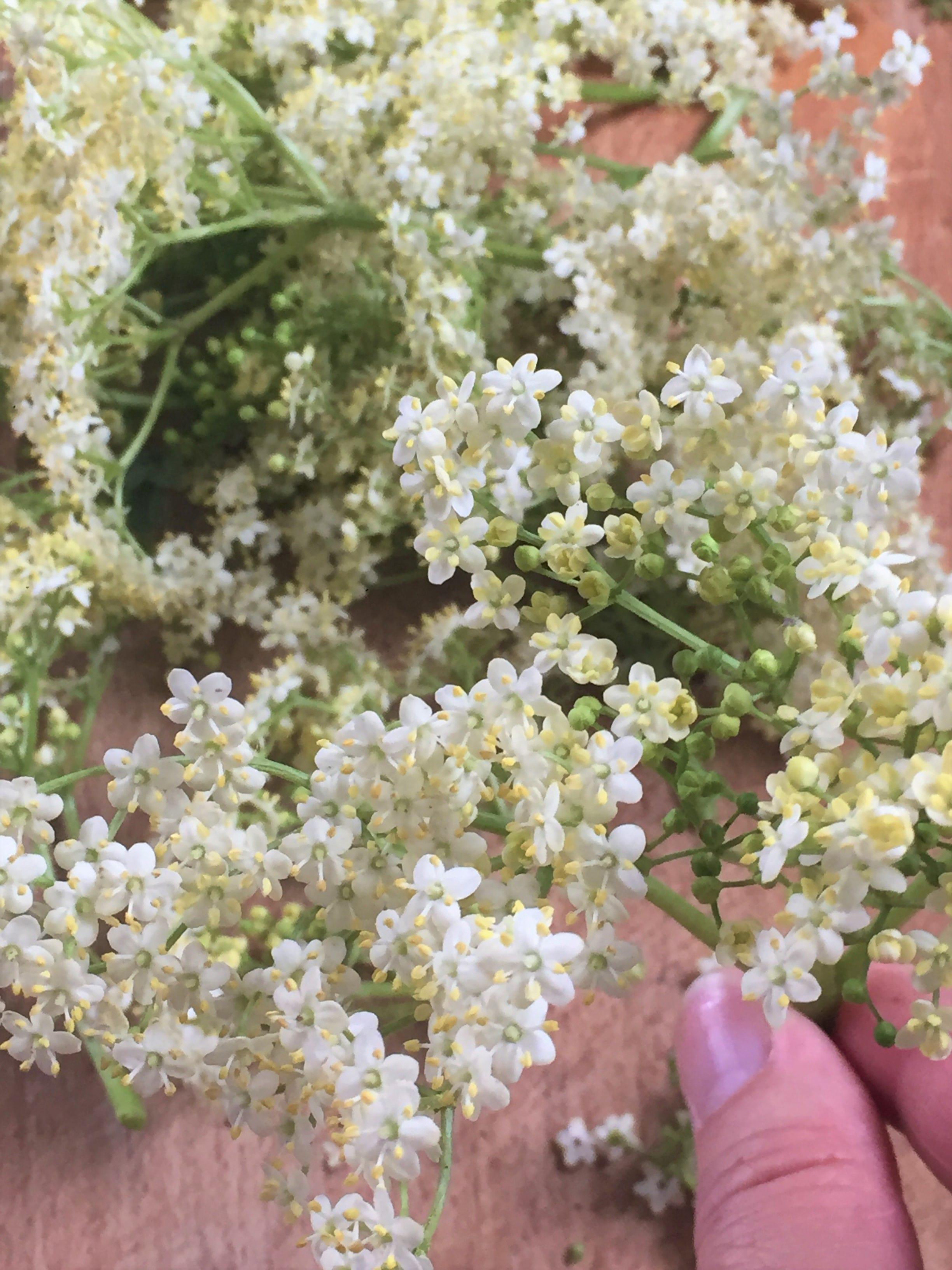 Que Faire Des Fleurs De Rhubarbe sirop de fleur de sureau noir: recette naturelle à base de