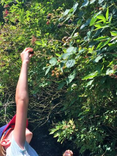 celiadreams-bonnes-adresses-ballade-armotatips-reconnaitre-plantes-sauvages-comestibles